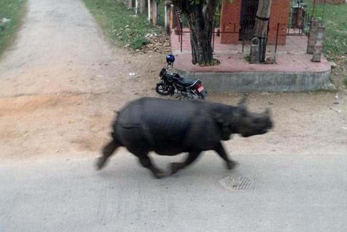 Rhino -chase _2015_03_30