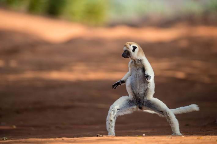 lemur snake-squat-2015-3-31