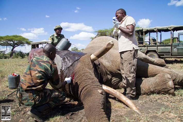 Injured Elephant 4 2015 04 07