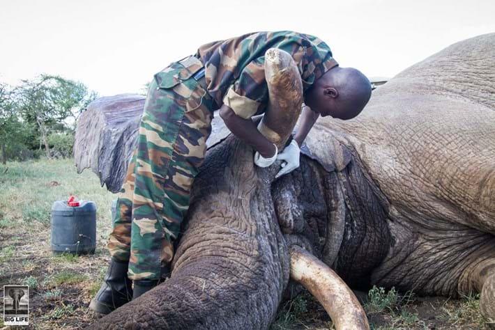 Injured Elephant 5 2015 04 07