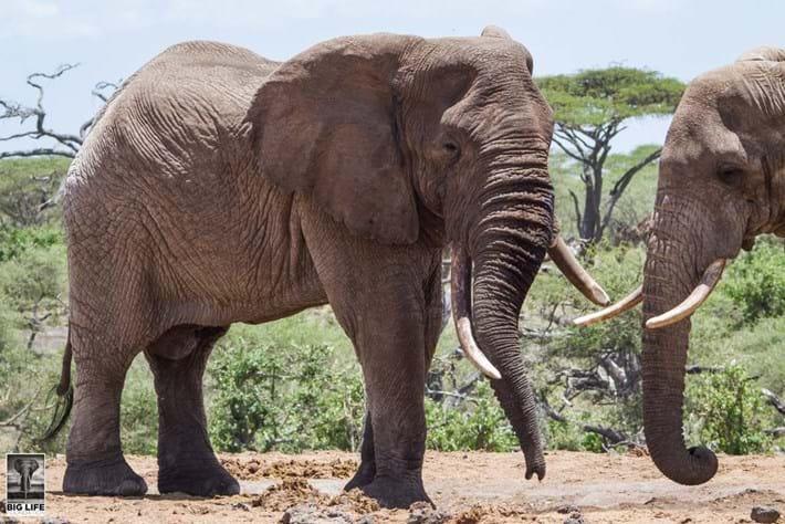 Injured Elephant 8 2015 04 07