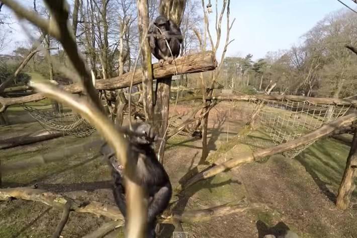 chimp-page-2014-4-15