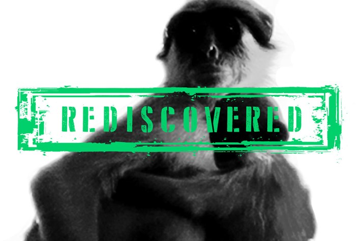 colobus monkey page_2015_04_20