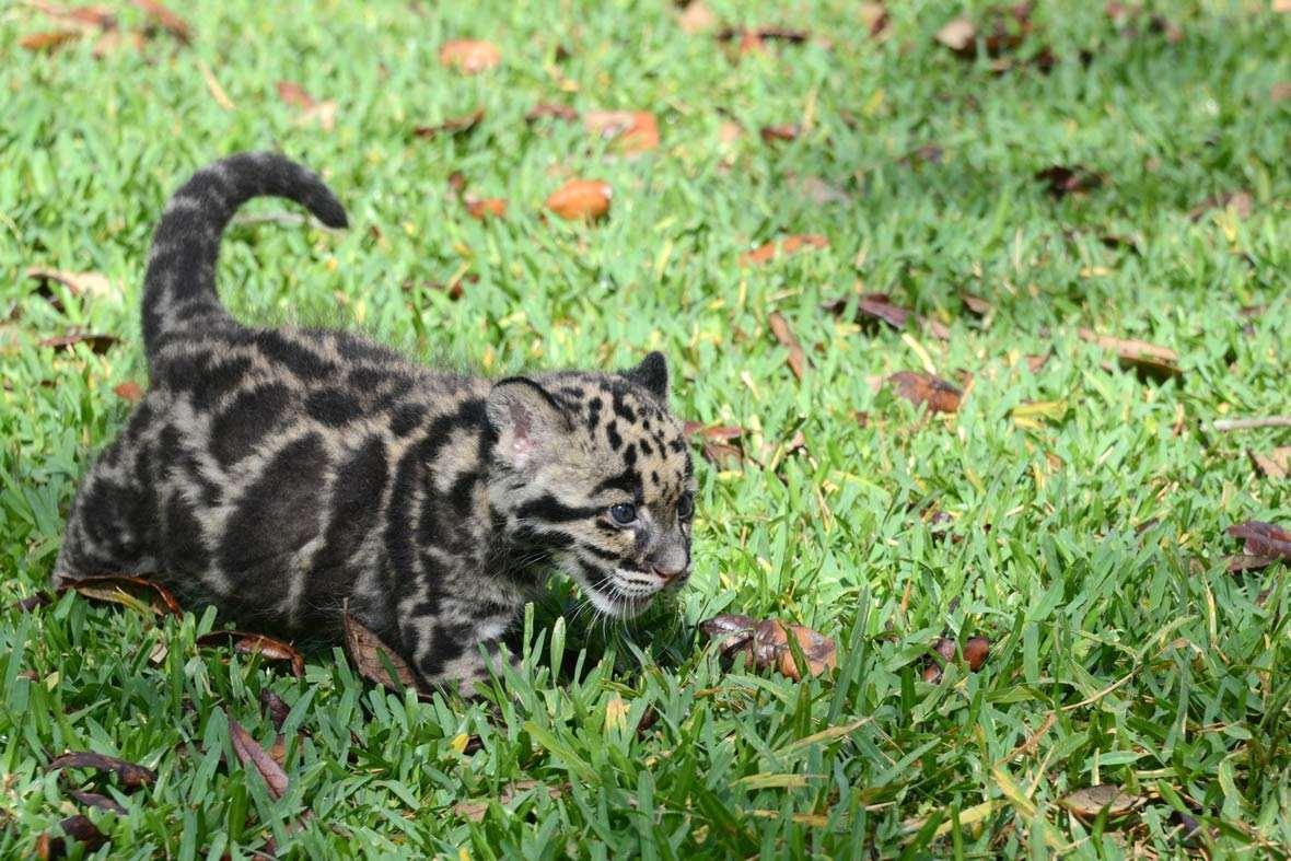 leopard-2-2015-4-21