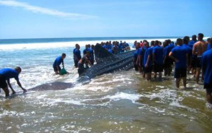 Rescuers battle for hours to save stranded whale shark