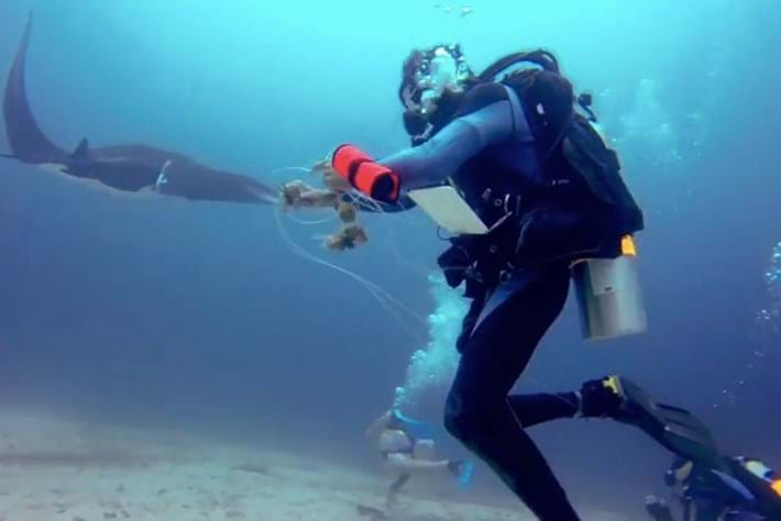 Diver rescues tangled manta ray in the Philippines