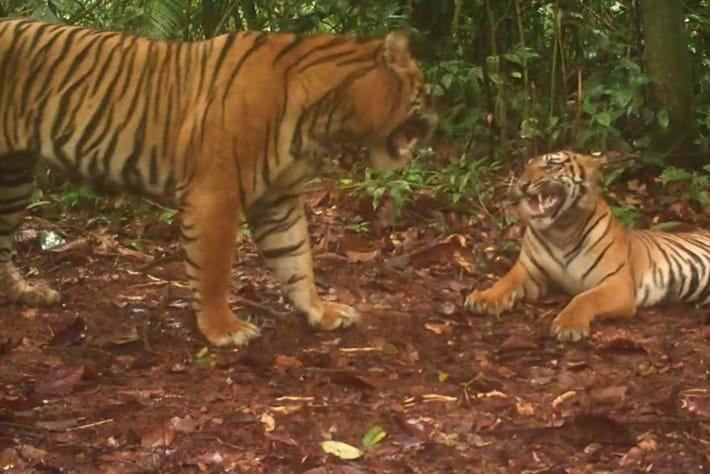 tigers-2014-4-29