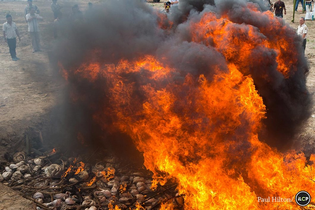 Burning the bodies