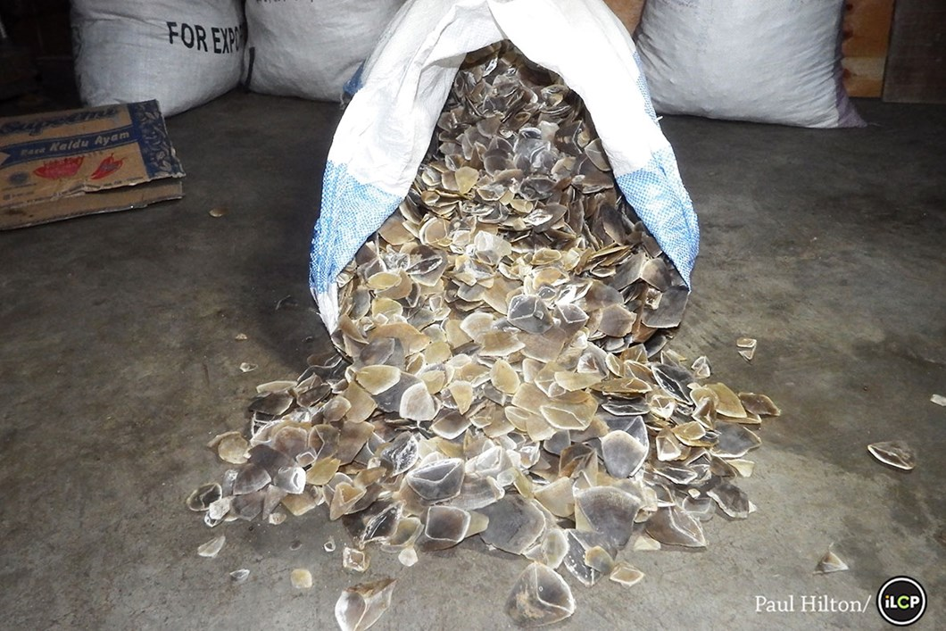 Bags of scales