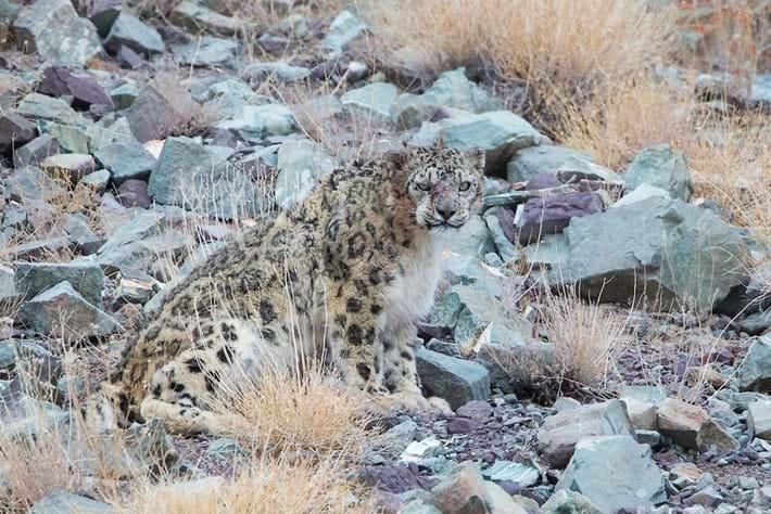 Leopard-10-2015-4-6