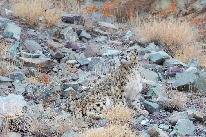 Leopard-12-2015-4-6