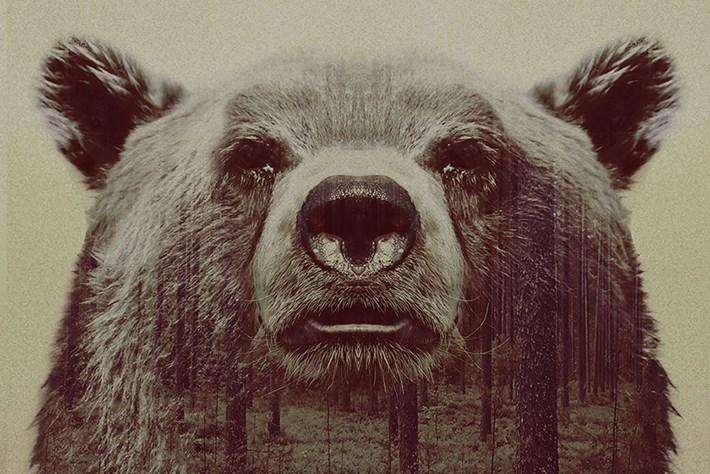 Bear Big 2015 05 06