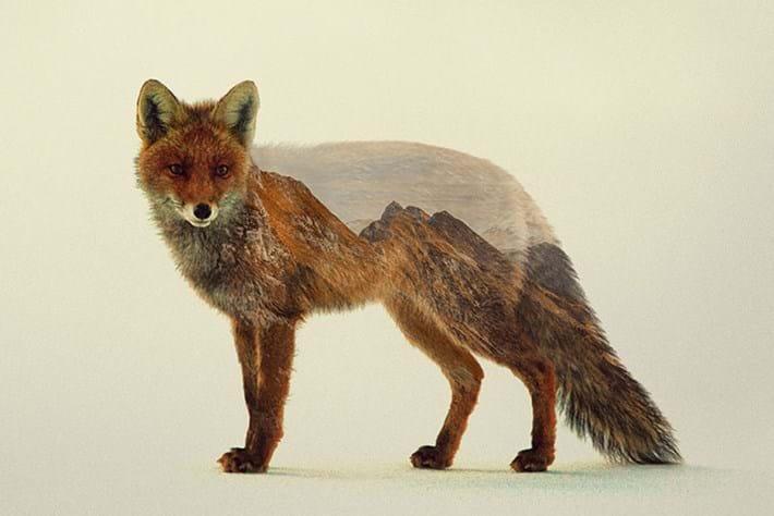 Norwegian artist fuses wildlife and landscapes to make dreamlike portraits