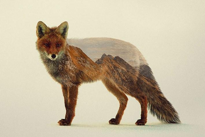 Fox 2015 05 06