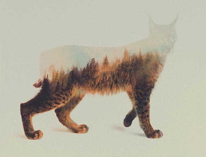 Lynx 2015 05 06