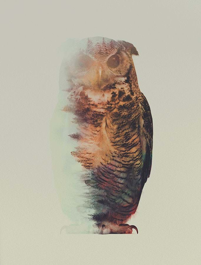 Owl 2015 05 06