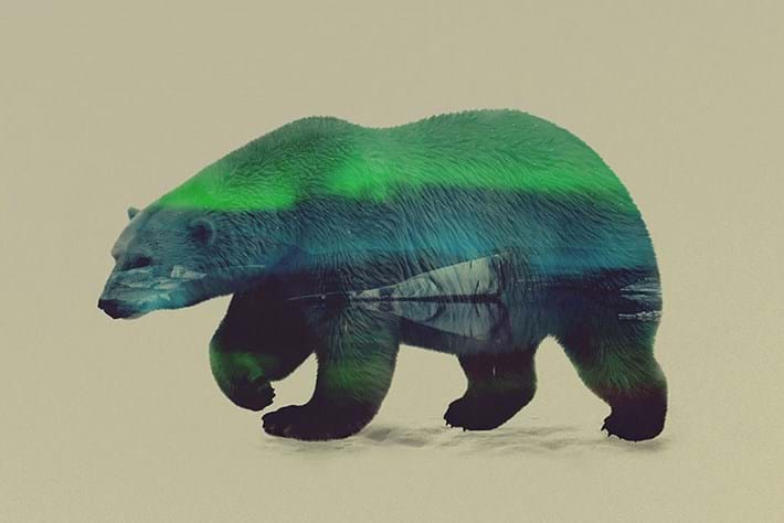 Polar Bear 2015 05 06