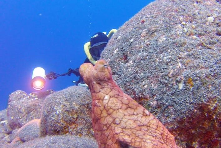 VIDEO: Octopus plays hide-and-seek with photographer