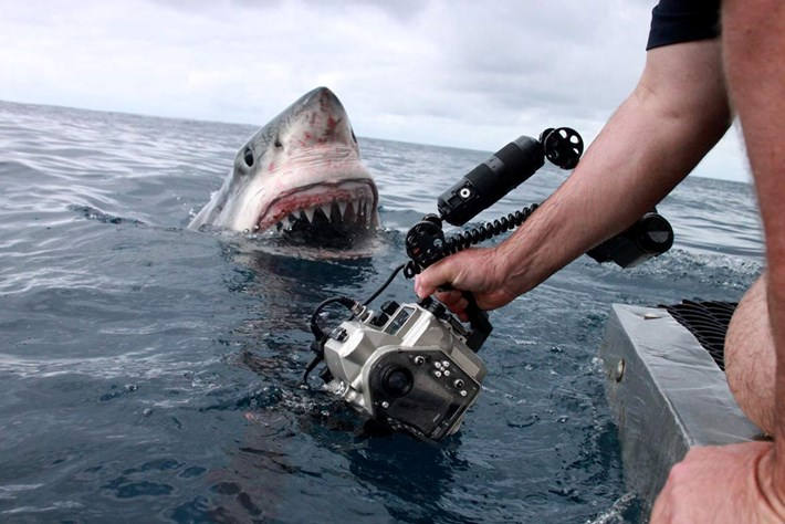 From the field: This viral shark encounter wasn't as dramatic as it looks