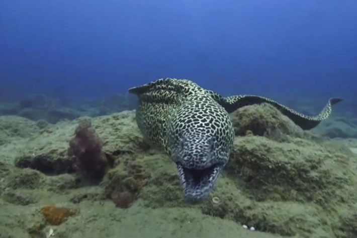 Out of my cave! Earth Touch cameraman attacked by moray eel