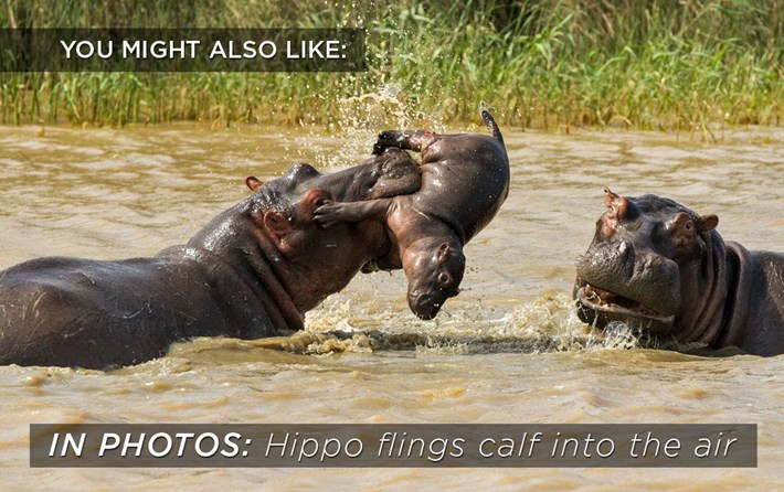 2015 05 13 Hippo Toss Related Content