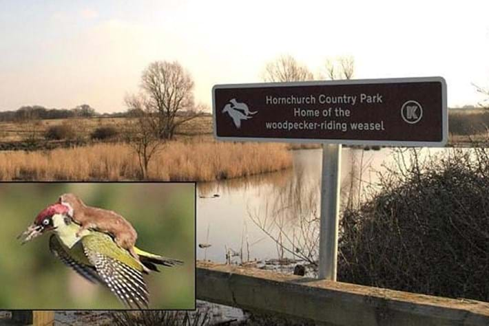 Update: The woodpecker-riding weasel has been immortalised