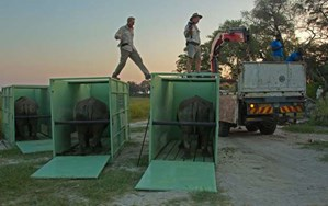 Ten rhino pioneers airlifted to Botswana as record-breaking relocation begins