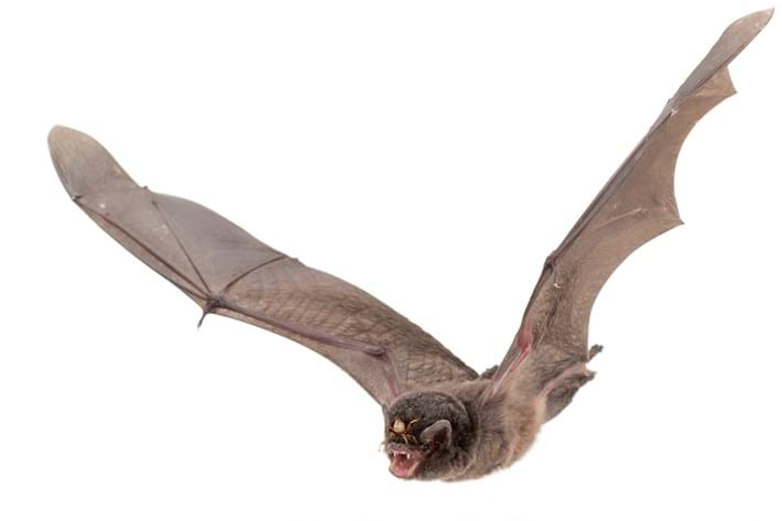 Bat fly zoomed out_2015_05_27