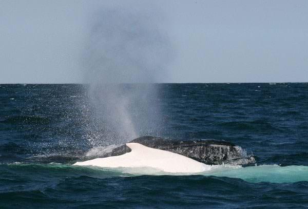 Whale And Albino 2015 05 28