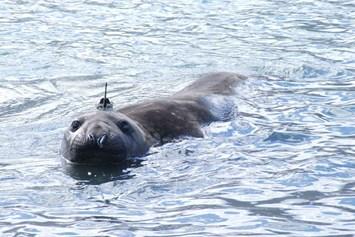 Seal Tracker In Water 2015 06 01