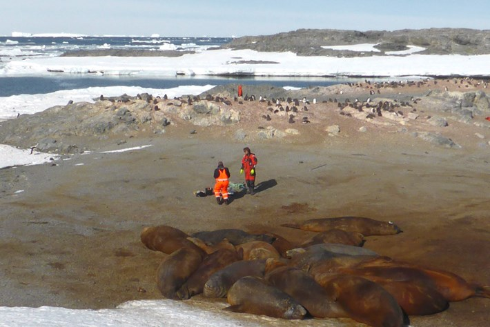 Scientists And Seals 2015 06 01