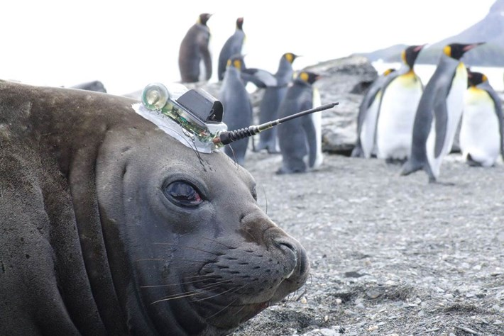 Seal Tracker Up Close 2015 06 01