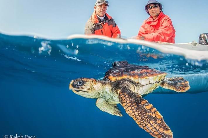 Turtle rescue 4-2015-06-02