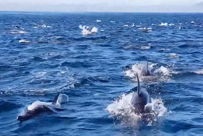 Dolphin superpod 2015-06-11