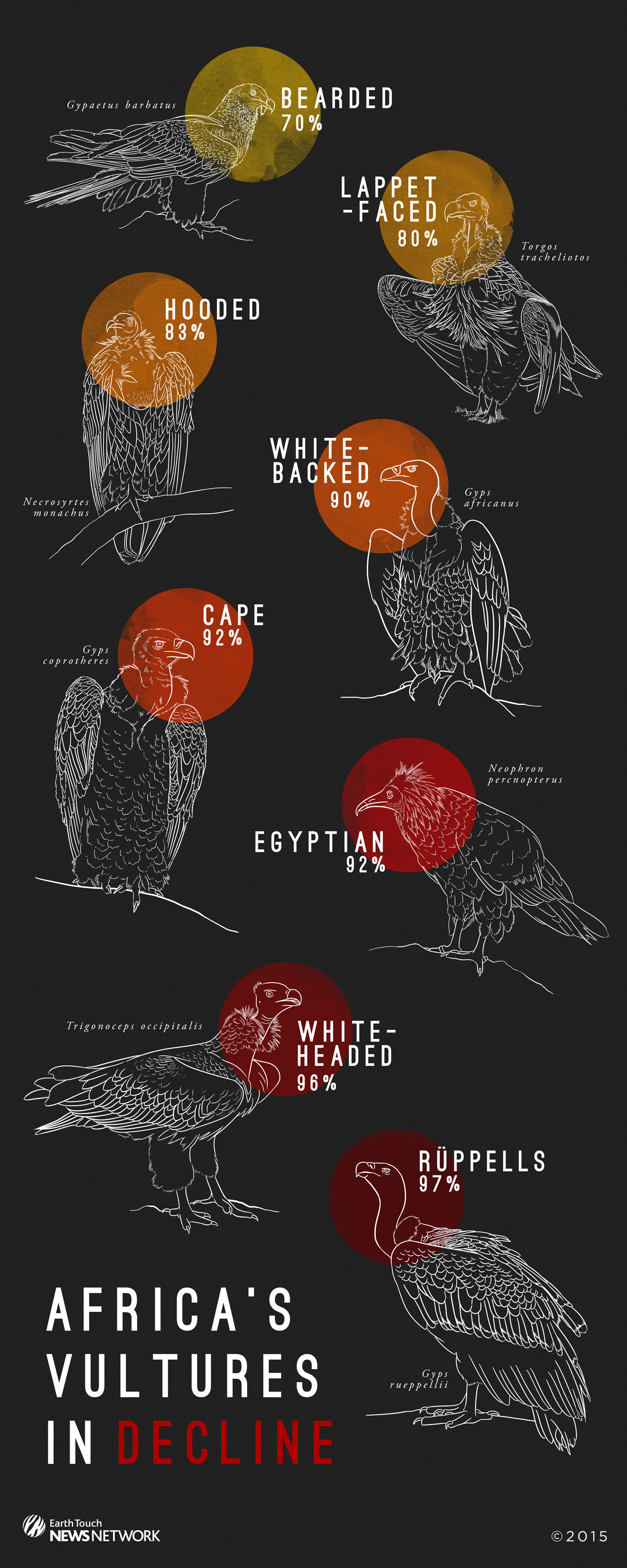 Infographic: Africa's vultures in decline