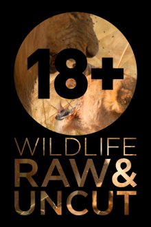Wildlife: Raw & Uncut
