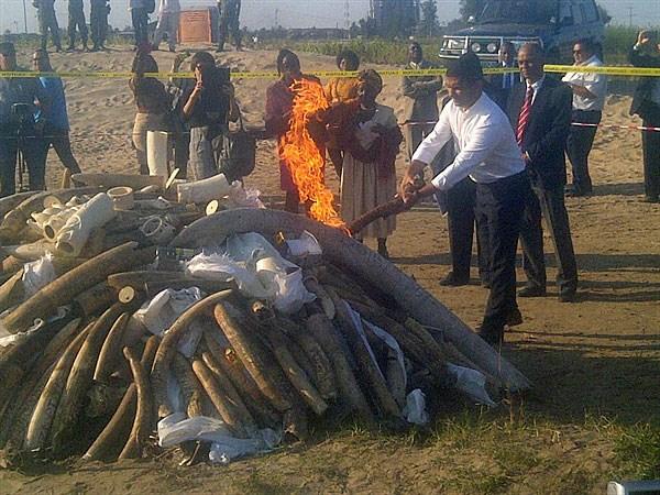 Mozambique -ivory -burn _2015_07_06