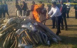 Mozambique burns ivory and rhino horn stockpile in a stand against wildlife crime