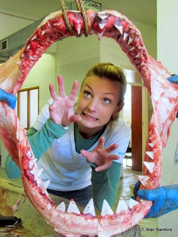 Michelle Jewell-Shark dissection-(c)-Blair-Ranford-Dyer Island Conservation Trust-2015-7-4