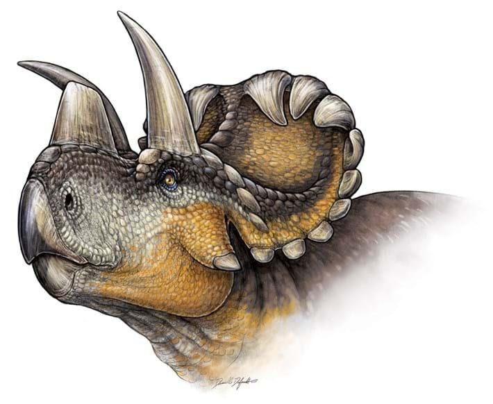 Wendicratops _dinosaur _2015_07_08