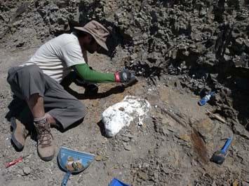 Digging _bones _new -dino _2015_07_08