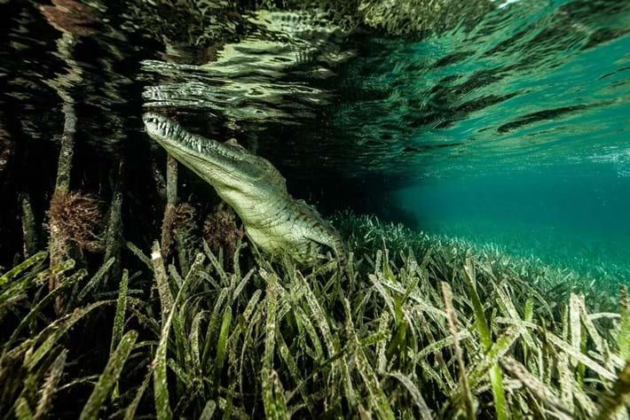 Crocodiles-3-2015-7-13