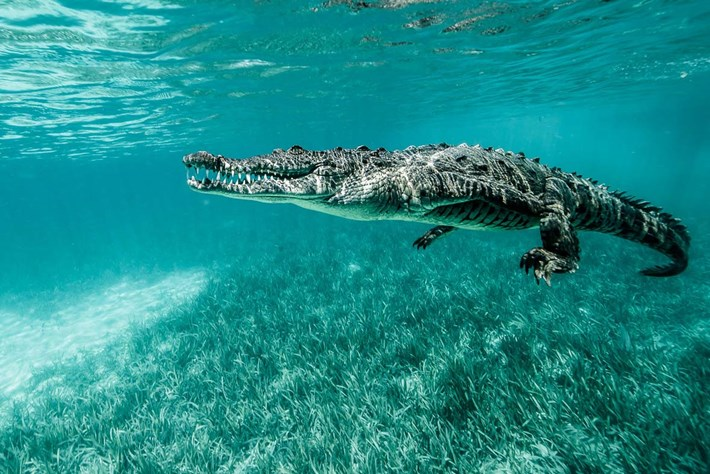 Crocodiles-6-2015-7-13