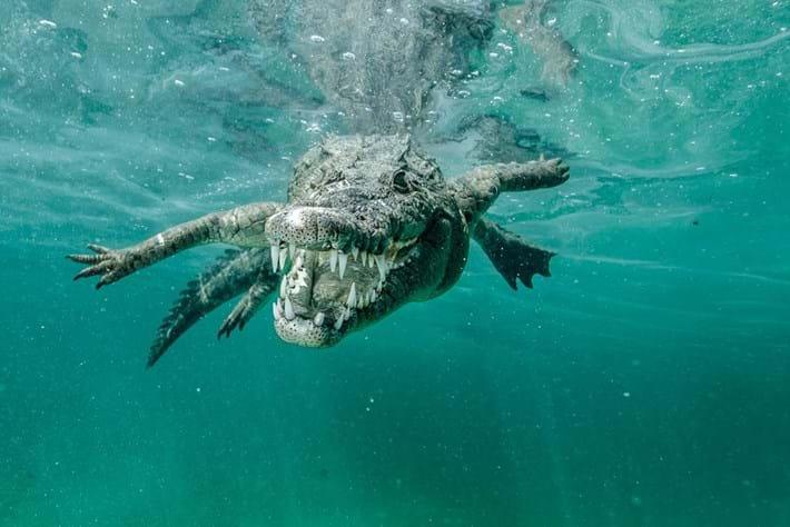 Crocodiles-8-2015-7-13