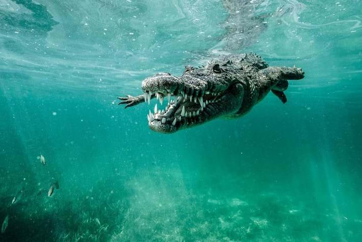 Crocodiles-9-2015-7-13
