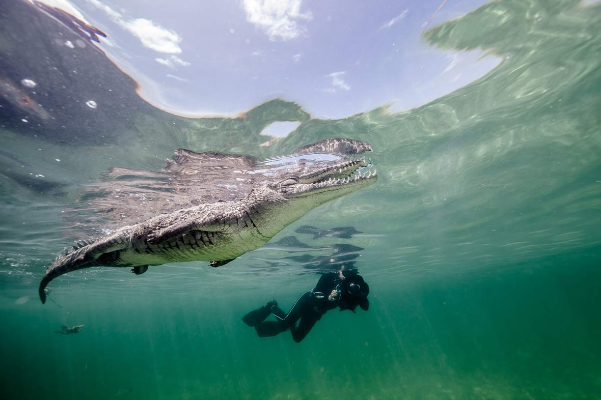 The most beautiful crocodile photos we've ever seen