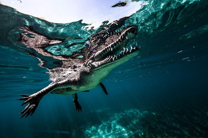 crocodiles-11-2015-7-13