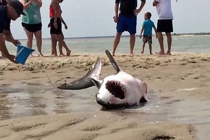 Shark -rescue -page _2015_07_15