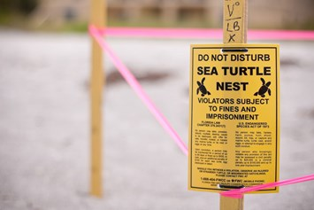 Turtle nest Florida 2015-07-20