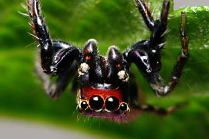 vampire spider page_2015_07_21